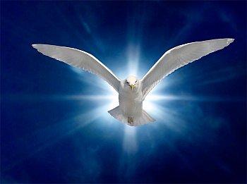 Spiritual Development Teaching - True Freedom