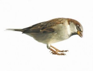 Spiritual Development Teaching - Many Sparrows